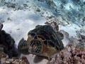 完全にスリープモードのウミガメ!